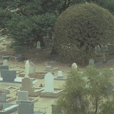 South Africa Keimoes graveyard and kokerboom